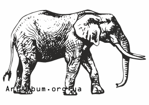 Clipart african elephant