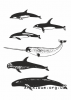 Clipart toothed whales