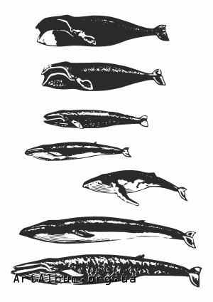Clipart whales
