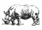 Clipart african white rhinoceros