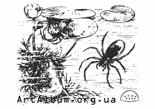 Clipart water spider
