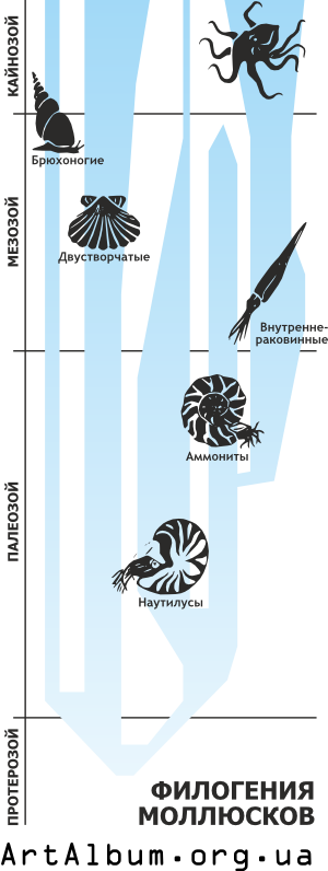 Clipart phylogeny of molluscs in russian