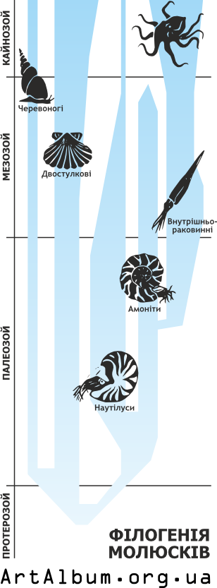 Clipart phylogeny of molluscs in ukrainian