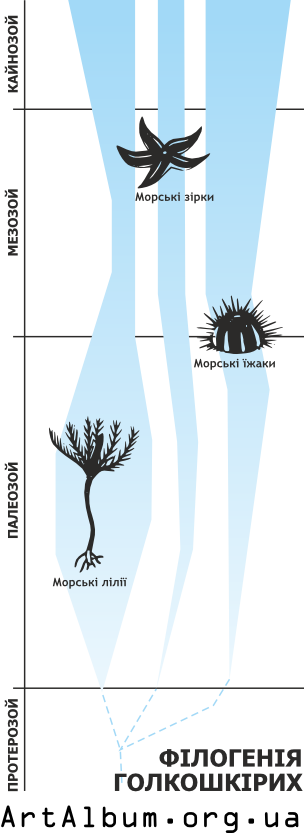 Clipart phylogeny of echinoderms ukrainian