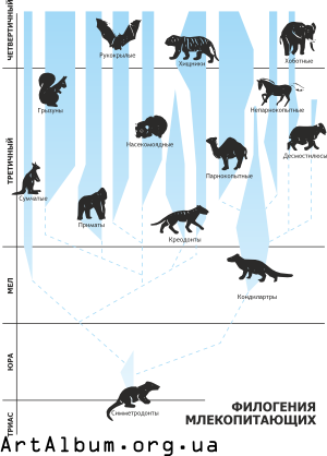 Clipart phylogeny of mammals in russian