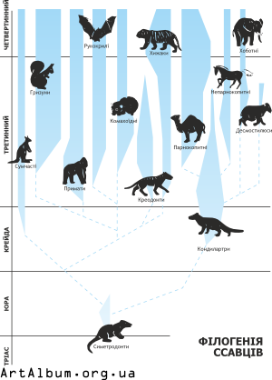Clipart phylogeny of mammals in ukrainian